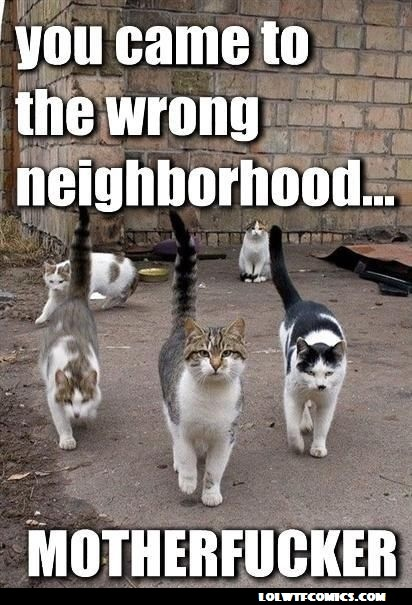Everybody wants to be a cat..