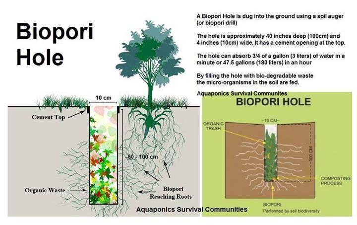 Biopori hole green is an attitude