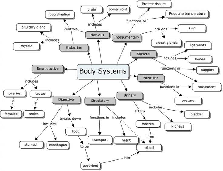 Body Systems Concept Map Body Systems Concept Map Key