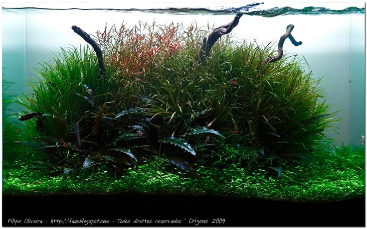 dutch tank aquarium plant aquascape [FISHES] Pinterest