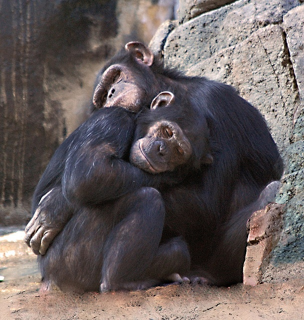 Hugs by Twitchietai