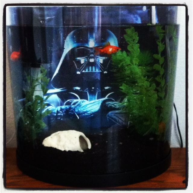 Fish tank i made for luke leia super easy to make for Make your own fish tank