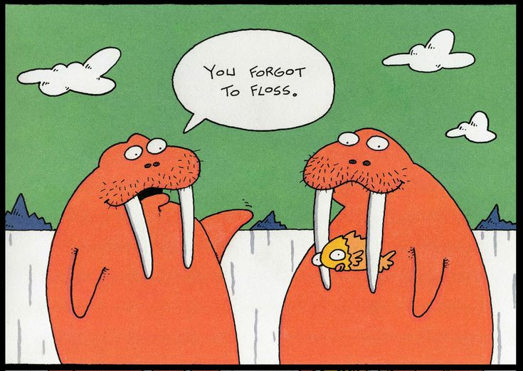 walrus comic, dentist comic, dentist funnies, walrus floss
