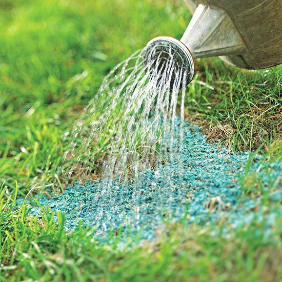 Repair Dead Patches Early fall is a great time to reseed any small