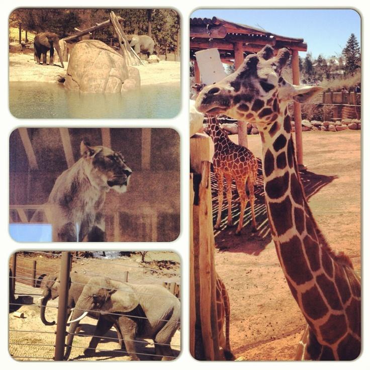 Denver Zoo Free Days: Cheyenne Mountain: Encounter Africa Cheyenne Mountain Zoo