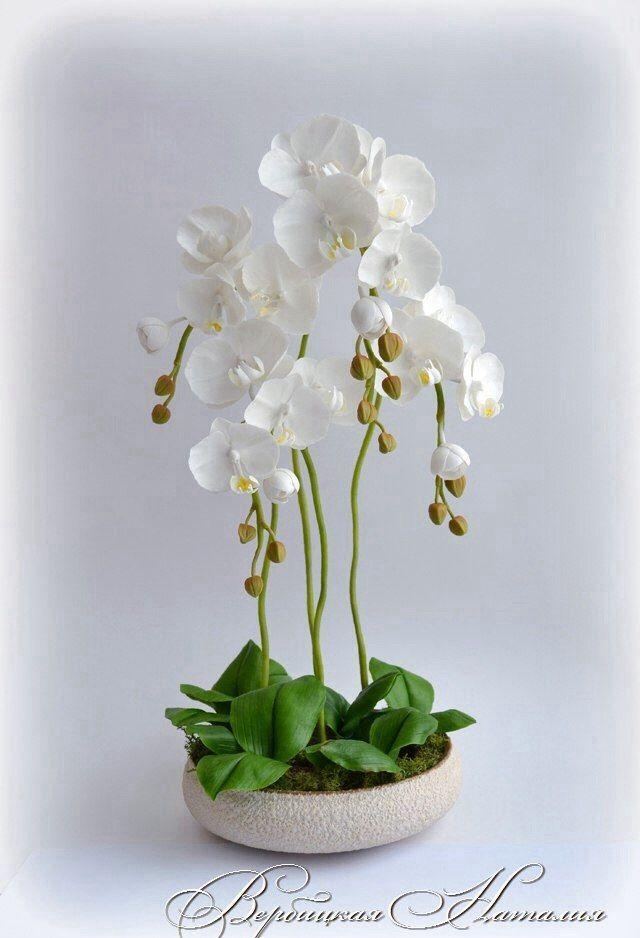 Мастер класс орхидеи из холодного фарфора