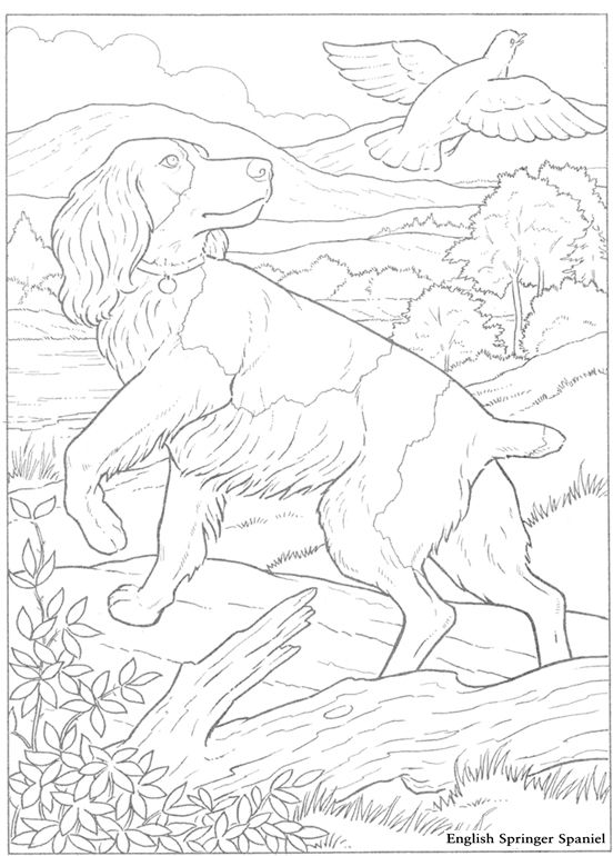 english springer spaniel coloring pages printable cheer megaphone outline sketch coloring page
