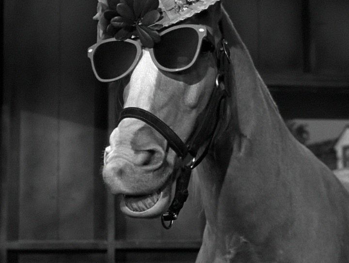 anthony weiner rides through addiction rehab horse