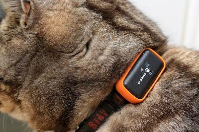 pet tracking app from iphone commercial