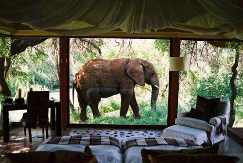 Safari Resort in South Africa