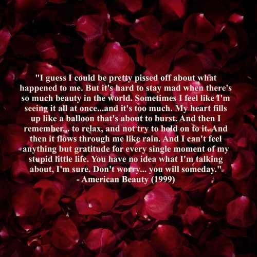 American Beauty Movie Quotes. QuotesGram