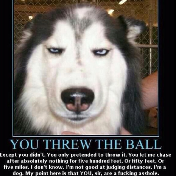 Haha Not Funny Meme : Absolutely hilarious el oh pinterest