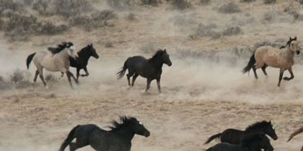 Wild Horse Protection Act