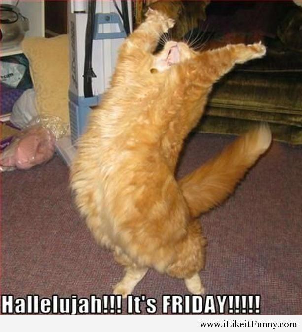 Finally Friday Funny Meme : Pin by kate irick on random funny pinterest