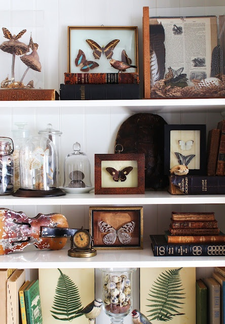 Shelves styled with nature collection