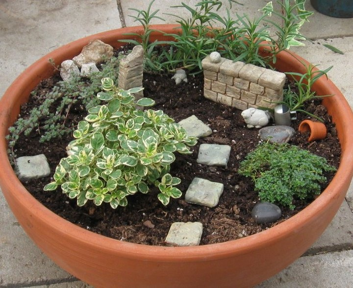 Fairy container garden wall dish gardening pinterest - Dish garden containers ...
