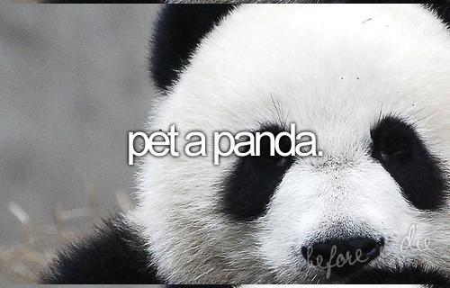 3. pet a panda.