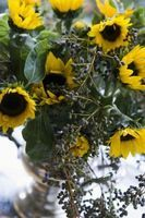 How to Preserve Sunflowers thumbnail