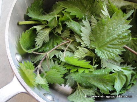 Stinging Nettle Pesto | Stinging Nettle Food | Pinterest