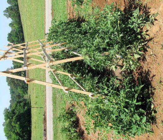 Vegetable garden trellis ideas photograph vegetable trellis for Vegetable garden trellis designs