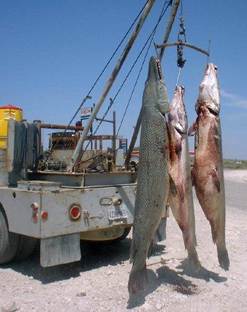 Pin by daniel roberts on fish pinterest for Lake amistad fishing