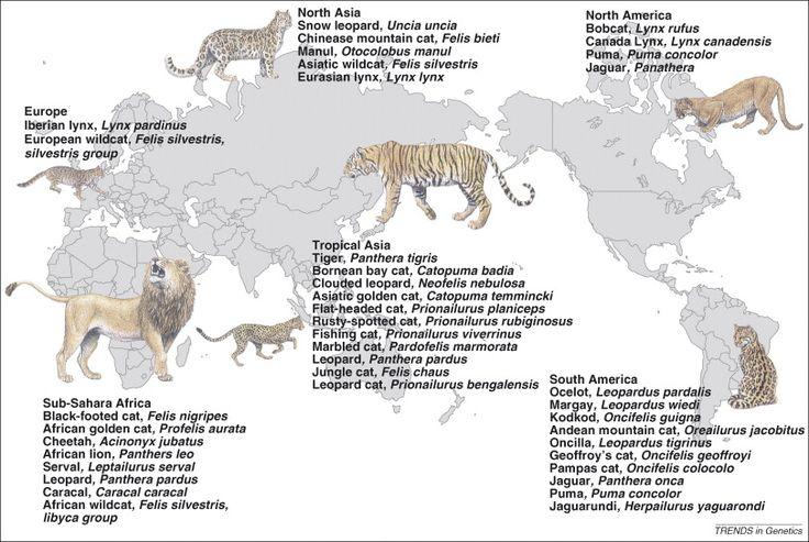 Common Ancestor Dog Cat