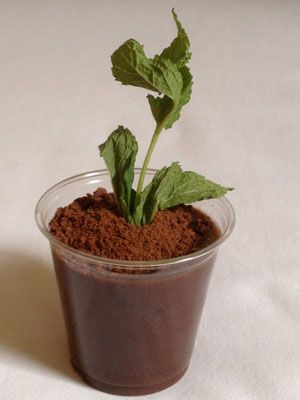 ... potted chocolate mint puddings recipes dishmaps potted chocolate mint