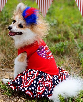 4th of july dog apparel