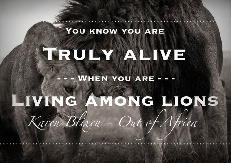If you have ever got up close to a pride of lions, you will know just what the lady means.  www.african-wildlife-safari.com