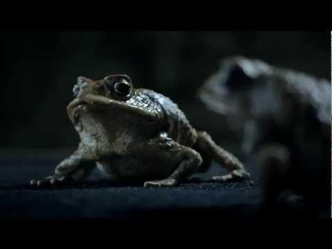 5 frogs on a log chu chu tv surprise