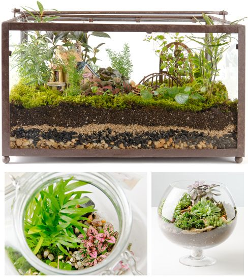 Fish tank herb garden fish garden combines self cleaning for Garden with fish tank