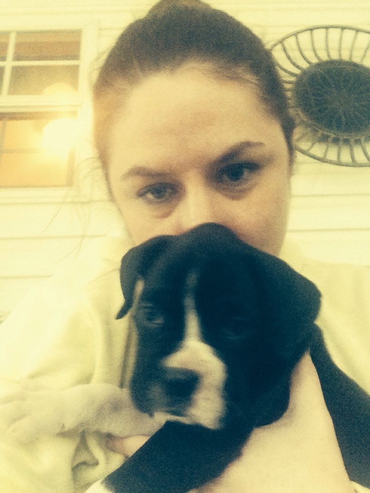 Pin by Stephanie Arnold on All about Sunny the Boxer | Pinterest