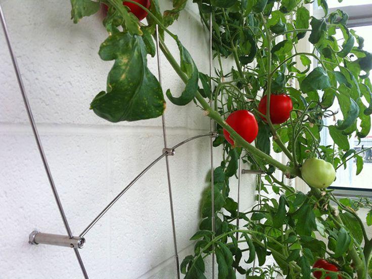 Pin by johanne daoust on urban garden trellis tomato for Www feeneyinc com