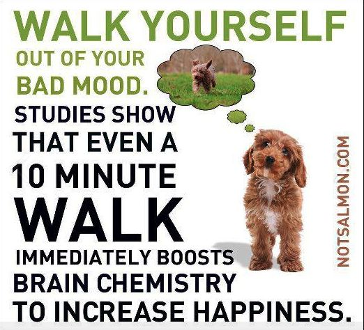"""""""Studies show that even a 10 minute walk immediately boosts brain chemistry to increase happiness."""" So true!"""