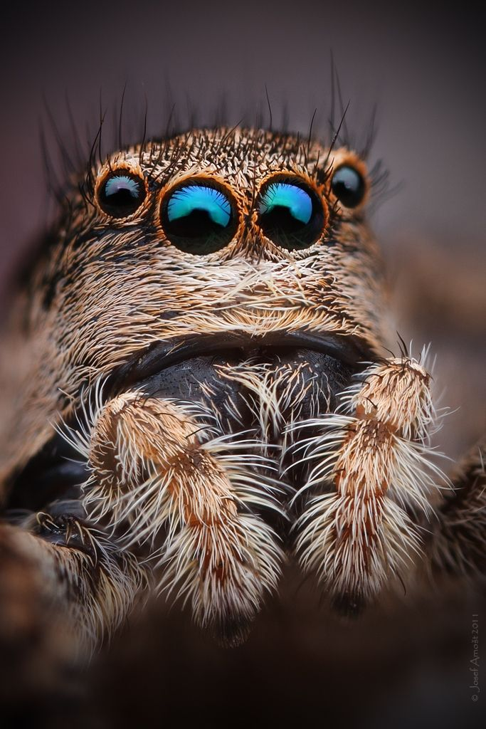 spider Macro | Macro