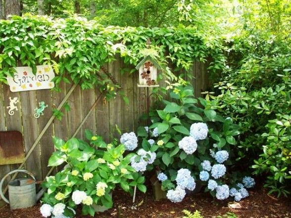 Pin By Maggie Zerkus On Gardening With Fayette Woman