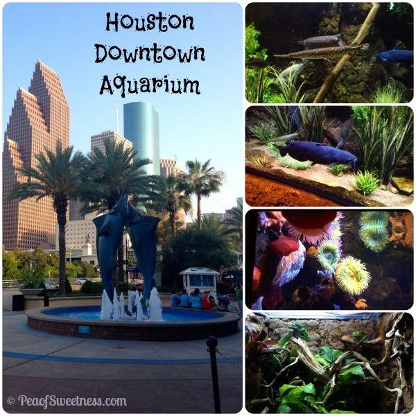 Houston Downtown Aquarium My Houston Texas Pinterest