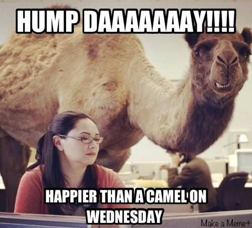 Geico Happy Hump Day Images Happy hump day camel geico