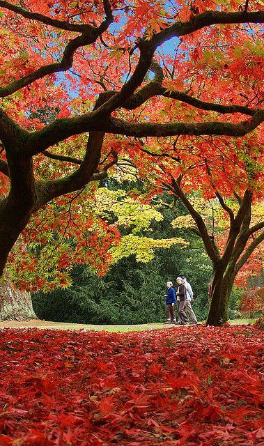 Autumn colours at Westonbirt Arboretum in Gloucestershire, England (by Anguskirk). #travel