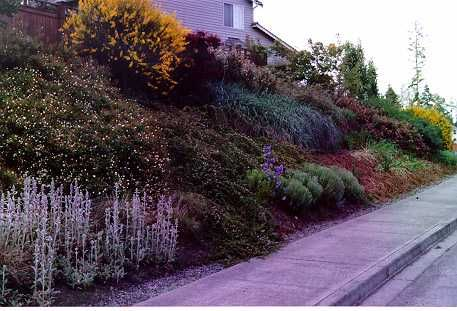 Garden Ideas Zone 6