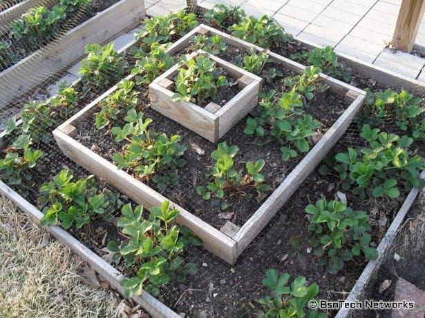 Strawberry Pyramid Plants And Garden Ideas Pinterest