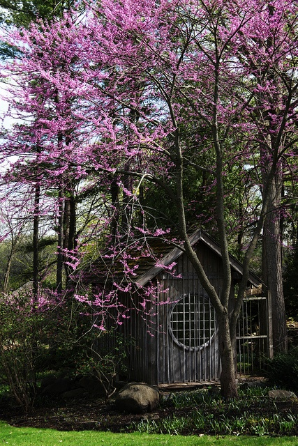 Dan is building a Japanese architecture influenced shed.  I like this one... or maybe I like that flowering tree... probably both.