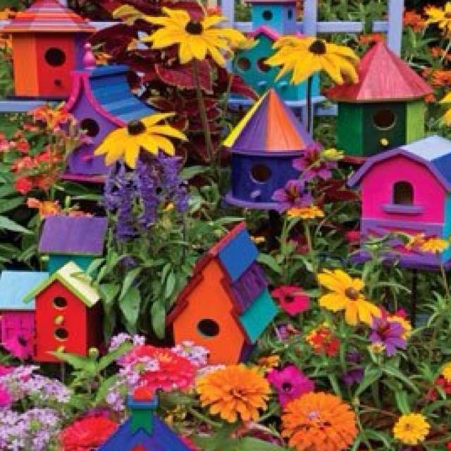 Bird Houses Color Splash Pinterest