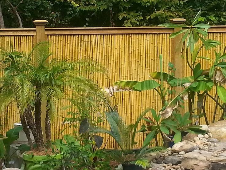 privacy bamboo fence new wind fence ideas pinterest. Black Bedroom Furniture Sets. Home Design Ideas