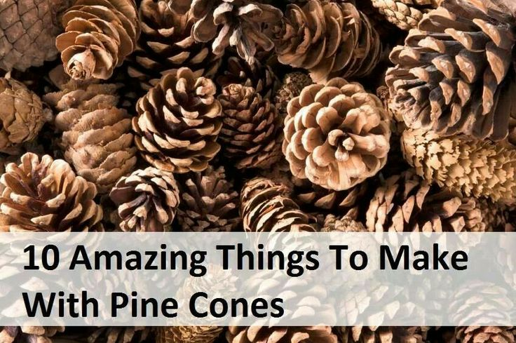 things to make with pine cones a great idea pinterest