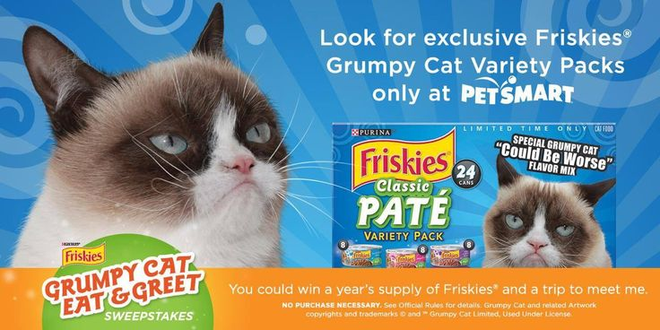pin by carol friese on grumpy cat pinterest