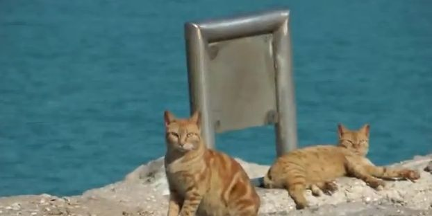 VIDEO: Stray cats and their Tel Aviv strut – The're sexy and they know it on http://sizedoesntmatter.com