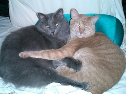 My cats Cybil & Morris. Maldry, Houston, Texas. 11/8/12.