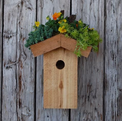 """Ecoroof birdhouse....They say to """"start small"""""""