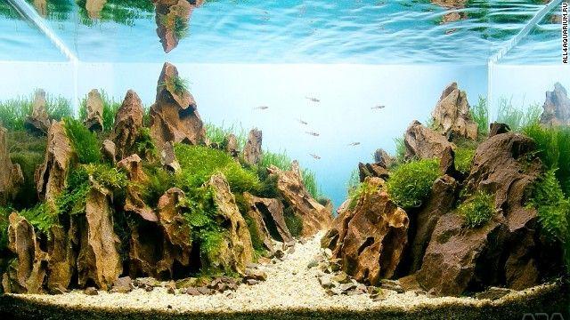 akvarium domov / home Pinterest